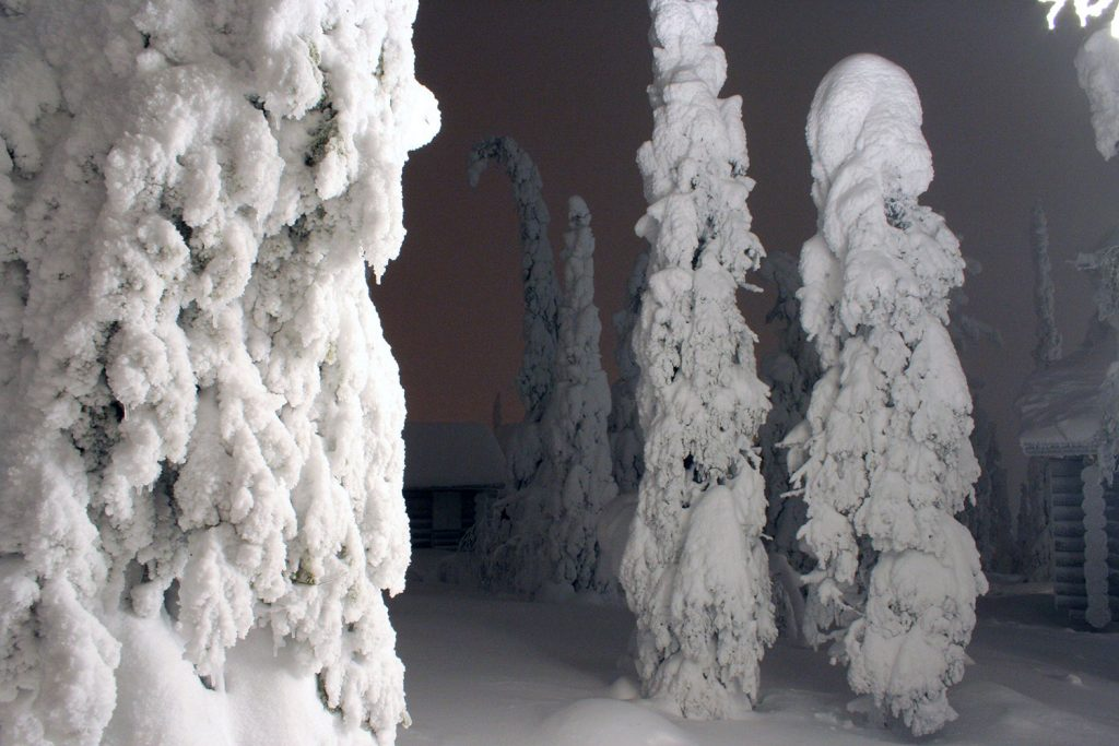 "Trees covered with ""tykkylumi"" (crown snow)."